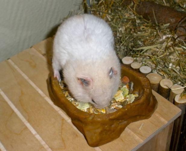 r u00e9sum u00e9   le hamster  u2013 eldanar u0026 39 s hamsterworld