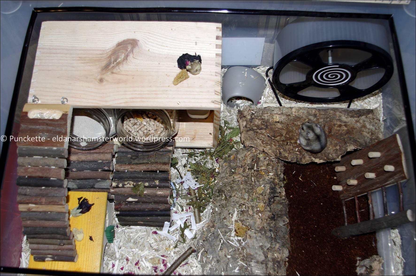 1000 images about hamster on pinterest hamster cages for Hamster bin cage tutorial