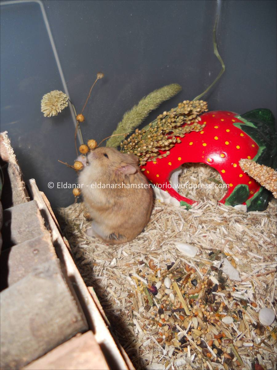 Plantes Autorisees Pour La Cage Eldanar S Hamsterworld
