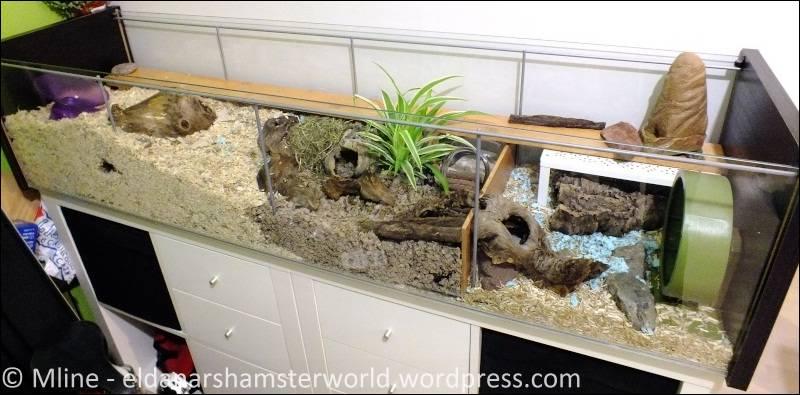 budget limit mais besoin d une grande cage pas impossible eldanar 39 s hamsterworld. Black Bedroom Furniture Sets. Home Design Ideas