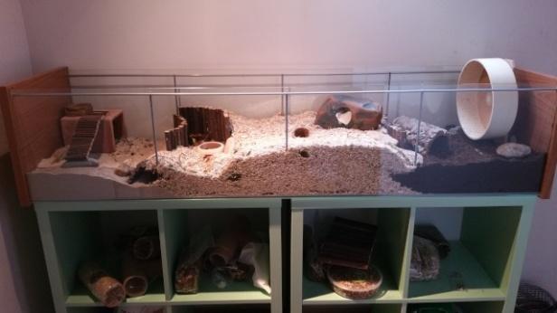 Ajout de litière pour que le hamster puisse creuser des galéries.